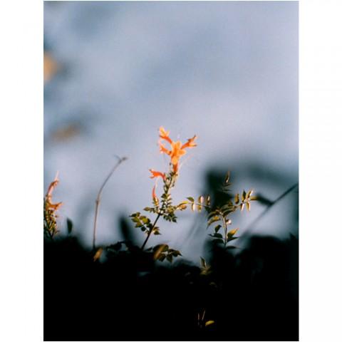 flores-naranjas